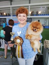 Superresults of our dogs at the dog show in Georgia